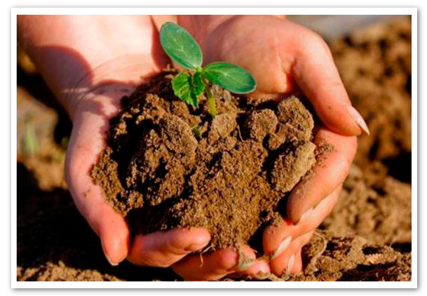 opinion-dia-mundial-de-la-agricultura
