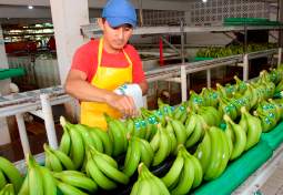 regularizacion-de-plantaciones