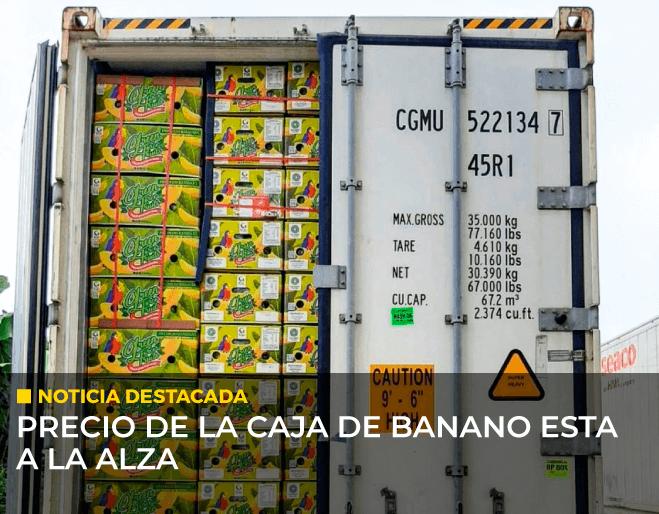 precio-de-la-caja-de-banano-esta-a-la-alza