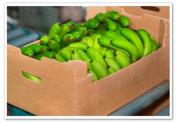 Mercado-spot-de-banano-es-de-precios-bajos-1