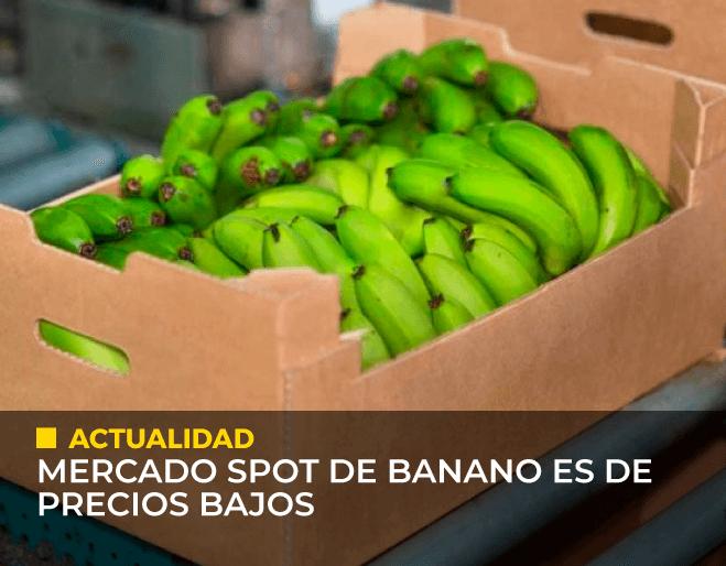 Mercado-spot-de-banano-es-de-precios-bajos