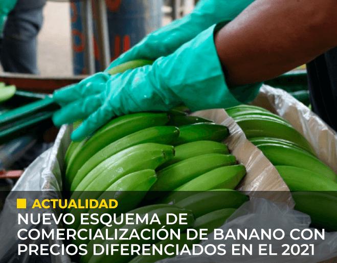nuevo-exquema-de-comercializacion-de-banano