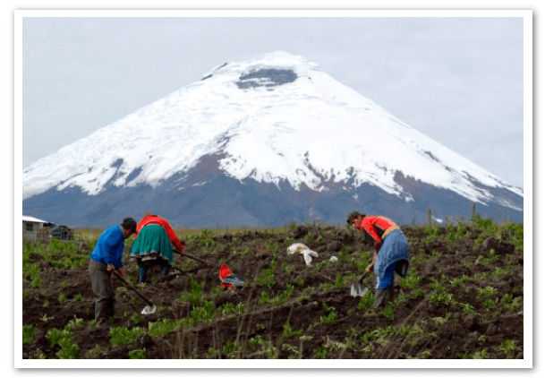 agricultura-en-Ecuador-chimborazo