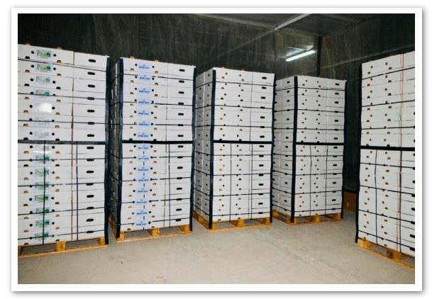 cajas-de-aguacate